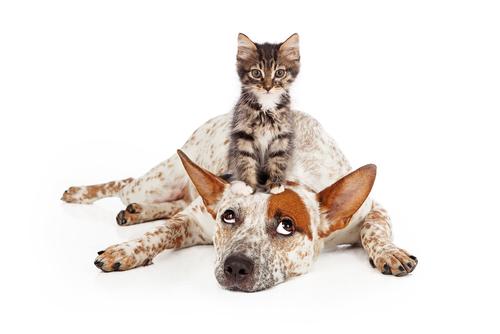 ckien et chat