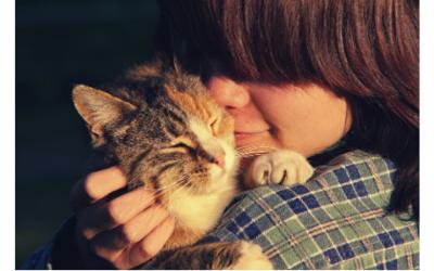 Lien entre un humain et son animal domestique : un hasard ?