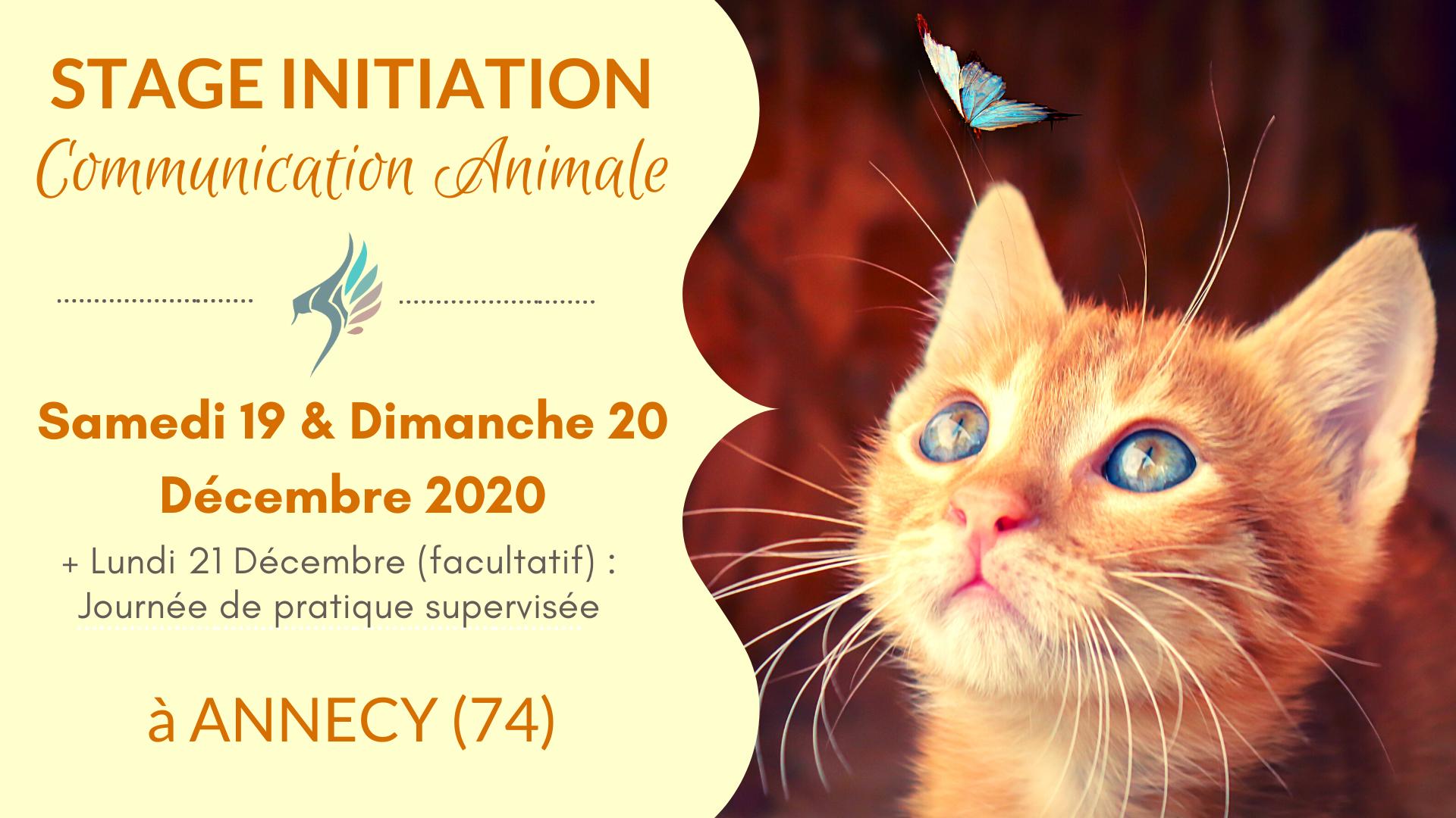 Stage communication animale