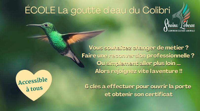 ecole la goutte d'eau du colibri