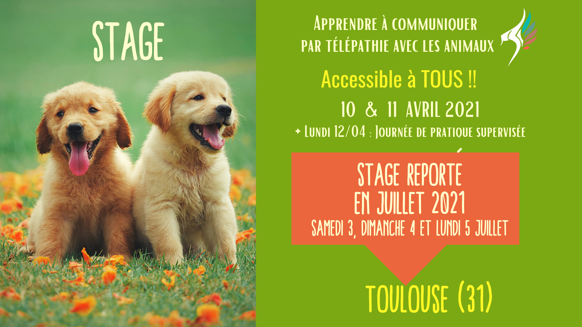 stage communication animale